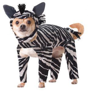 PET20100_Zebra