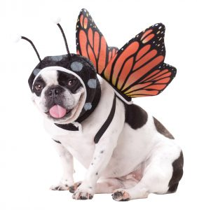 PET20101_Butterfly