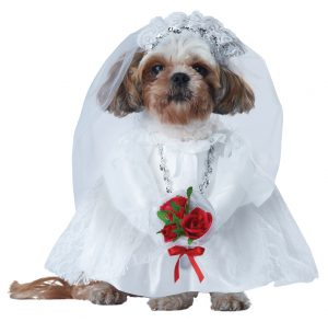 PET20137_PuppyLove-Bride