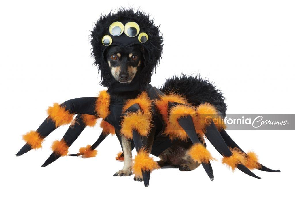 SPIDER PUP DOG COSTUME  sc 1 st  California Costumes & SPIDER PUP DOG COSTUME - California Costumes