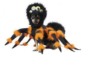 PET20149_SpiderPup_01
